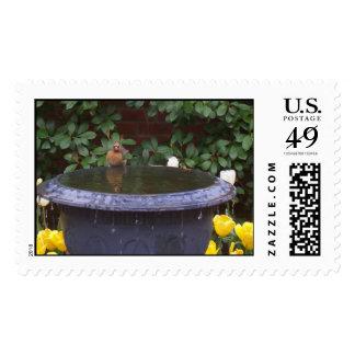 birdbath postage stamp