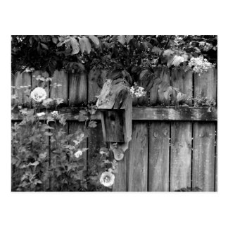Birdhouse in Summer Postcard