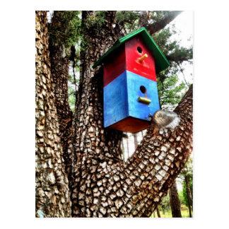 Birdhouse rojo en postal del árbol del enebro del