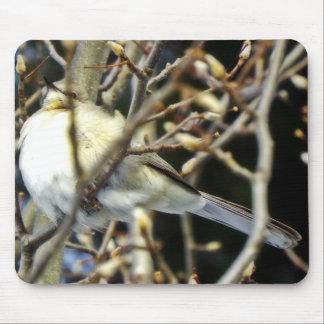 Birdie on the winter branch mousepad