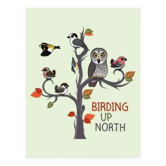 Birding Up North Postcard