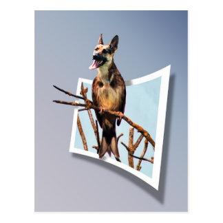 """Birdog """"Out of bounds"""" postcard"""