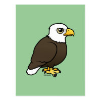 Adult Bald Eagle Postcard