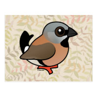 Black-throated Finch Postcard