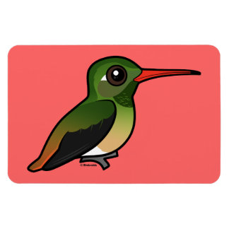 Birdorable Buff-bellied Hummingbird Magnet