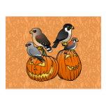 Birdorable Raptors on Pumpkins Postcards