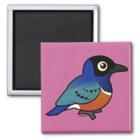 Superb Starling Square Magnet