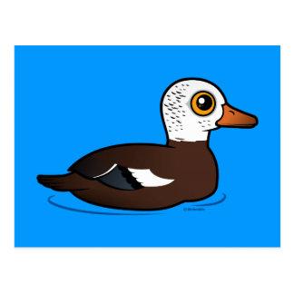 Birdorable White-winged Duck Postcard