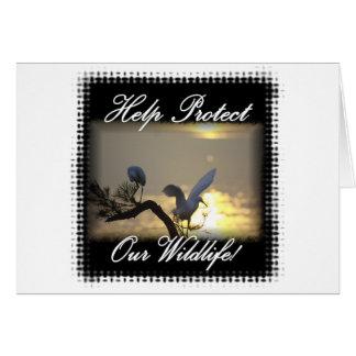 Birds--0001TwoBirdsOnLimb Card