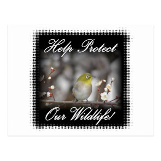 Birds--0002BirdYellowHeadOnLimb Postcard
