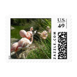 Birds 007 Stamp