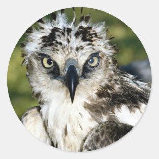 Birds 19 classic round sticker