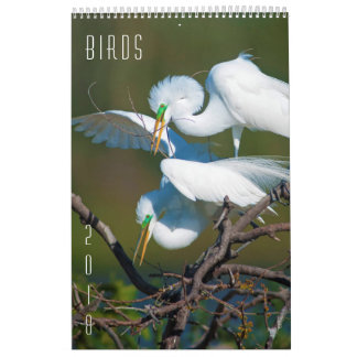 Birds - 2018 Wildlife Wall Calendar by Steven Holt
