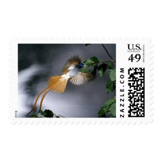 Birds 275 postage