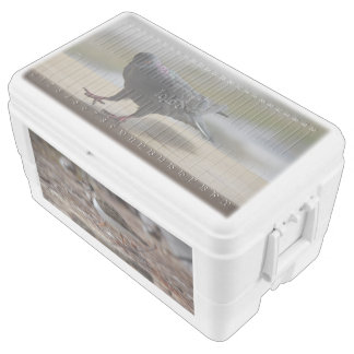 Birds, 48 Quart Duo Deco Cooler