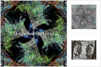 Birds and Beyond