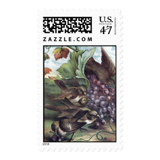 Birds and Grapes Victorian Illustration Postage
