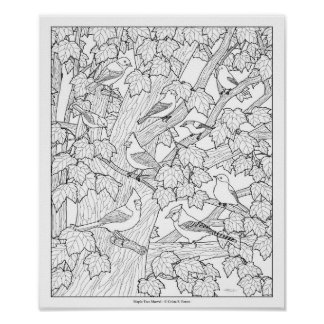 """Birds and Maple Tree Adult Coloring Page 12""""x10"""" Poster"""
