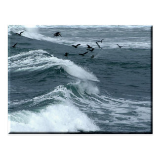 Birds And Waves Postcard