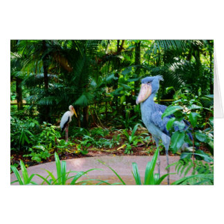 Birds at Singapore Zoo Greeting Card