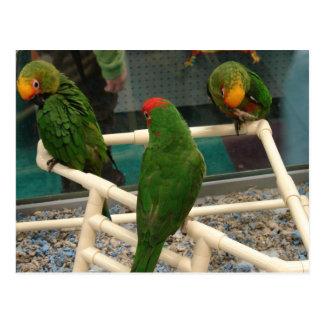 Birds at the Pet Store Postcard
