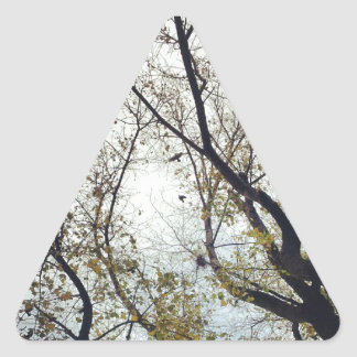 Birds between the trees triangle sticker
