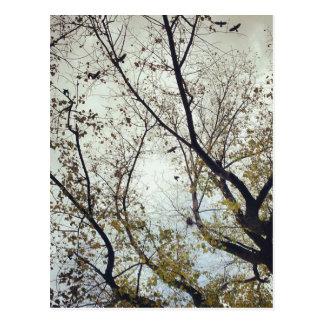 Birds between trees postcard