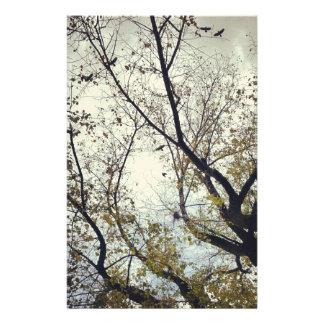 Birds between trees