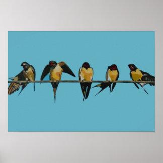 Birds Blue Backround poster