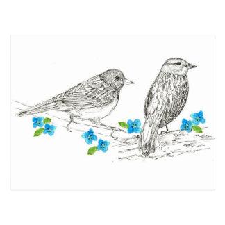 Birds Blue Flowers Nature Drawing Postcard