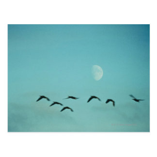 Birds by Moon Post Card