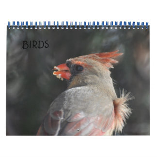 Birds Wall Calendar