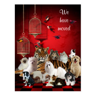 Birds & Cats and Cages Red, We moved Postcard Postcards
