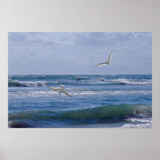 Birds diving into the ocean poster