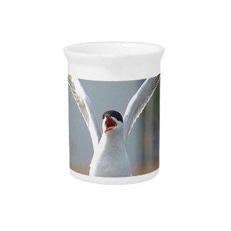 birds drink pitcher