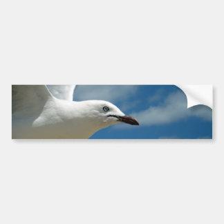 Birds_Eye_View,_ Bumper Sticker
