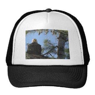 Birds Eye View Trucker Hats
