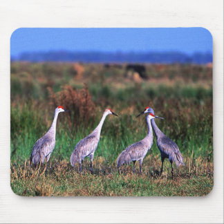 Birds - Florida Wetlands - Sandhill Cranes Mouse Pad