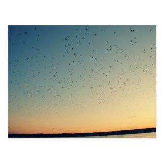 Birds Flying High Postcard