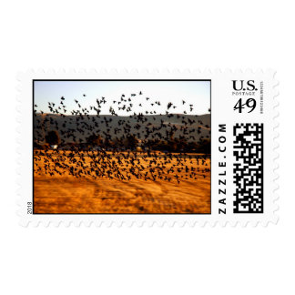 Birds flying in a field near Morgan Hill Stamp