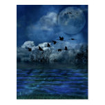 Birds flying in the night post cards