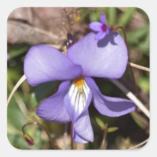 Birds-Foot Violet w/ Bluets Square Sticker