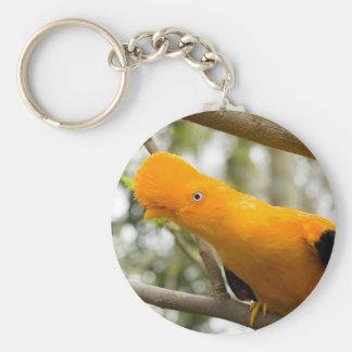 Birds  GALLITO DE LAS ROCAS Llavero Redondo Tipo Pin