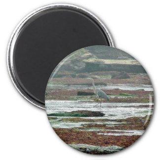 Birds Herons Beaches Tidepools Magnet