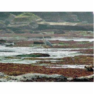 Birds Herons Beaches Tidepools Photo Cutouts