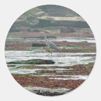 Birds Herons Beaches Tidepools Sticker