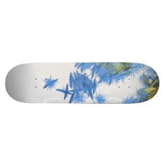 Birds in abundance skate boards