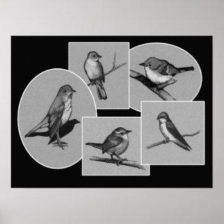 Birds in Charcoal: Drawings: Grey, Black: Wildlife Poster