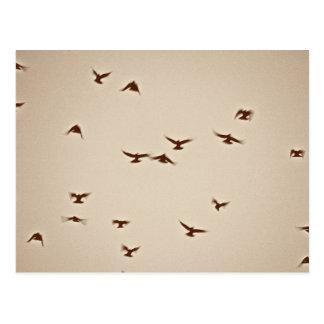 Birds In Flight vintage sepia Postcard