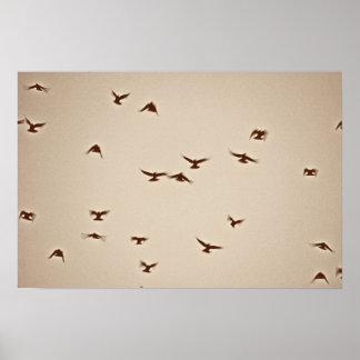 Birds In Flight vintage sepia Poster